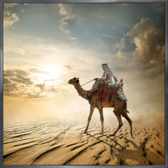 "Nielsen Gerahmtes Bild ""Kamel Wüste"" 30,0 x 30,0 cm"