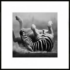 """Nielsen Gerahmtes Bild """"Zebra"""" 50,0 x 50,0 cm"""