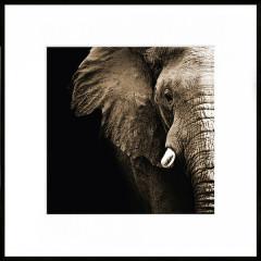 "Nielsen Gerahmtes Bild ""Elefant"" 50,0 x 50,0 cm"