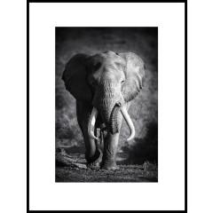 "Nielsen Gerahmtes Bild ""Elefant Schwarz & Weiß"" 60,0 x 80,0 cm"