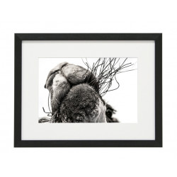 Gerahmtes Bild Animal Nr10 – Kunststoffrahmen Schwarz