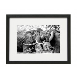 Gerahmtes Bild Animal Nr11 – Kunststoffrahmen Schwarz